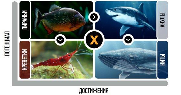 Рыбная матрица