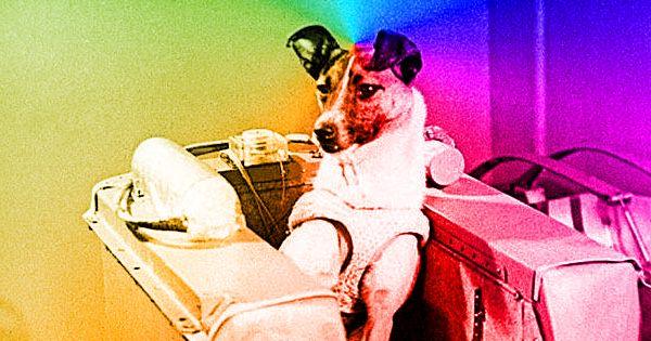 Лайка -- первая собака в космосе